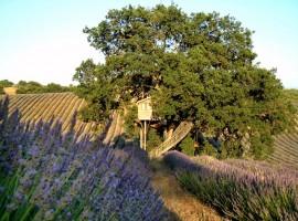 Casa del árbol en Agriturismo La Piantata