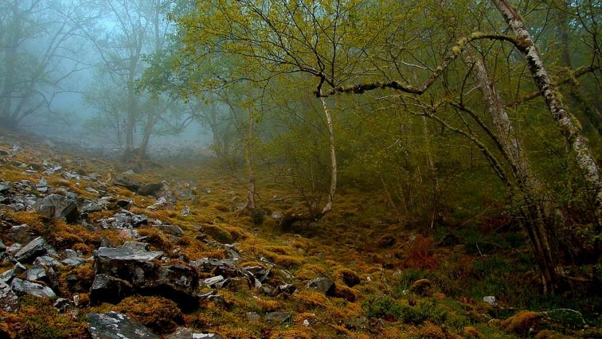 Bosque de Muniellos. Foto de Mario Quevedo vía Flickr