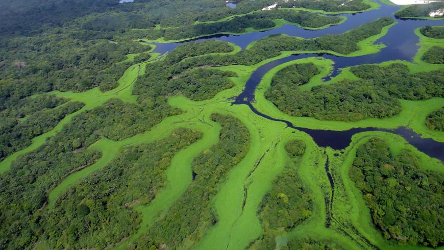 Parque Nacional de Anavilhana. Foto de Lincoln Barbosa vía Wikipedia Commons