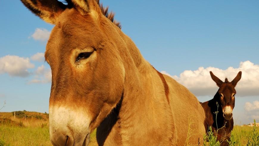 Dos burros