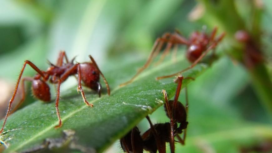 Hormigas. Foto de J.P. C. vía Flickr