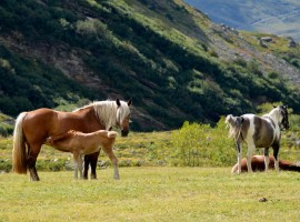 Caballos libres en el campo fotografia de Max Guitare via Flickr