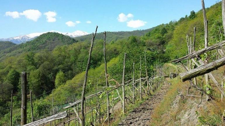Bosco delle Terrecotte Monte Monviso