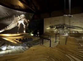 El esqueleto del dinosaurio del Museo de Historia Natural de Venecia
