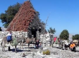 Excursión en burro cerca de Nuoro