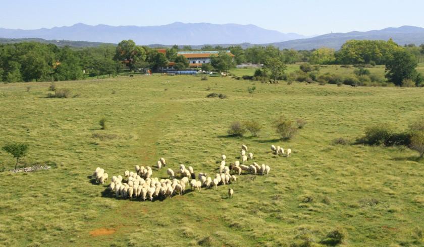 Agricamping Parque Rural Alture di Polazzo, Gorizia