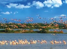 Flamencos en el parque del delta del Po