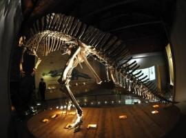 Dinosaurio en el Museo de Historia Natural de Venecia