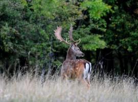 Un ciervo en Il Bosco dei Daini