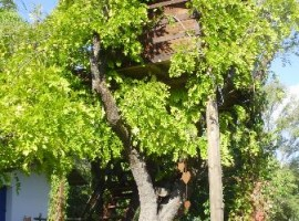 tree-house-16-270x200