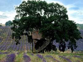 tree-house-270x200
