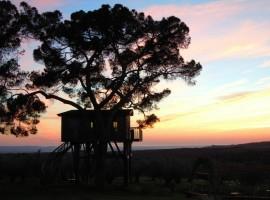 tree-house-3-270x200