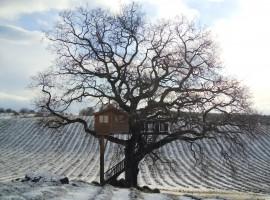 tree-house-4-270x200
