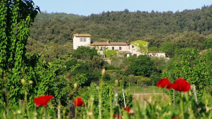 Vista del alojamiento Agriturismo Torre Doganiera, Toscana, Italia