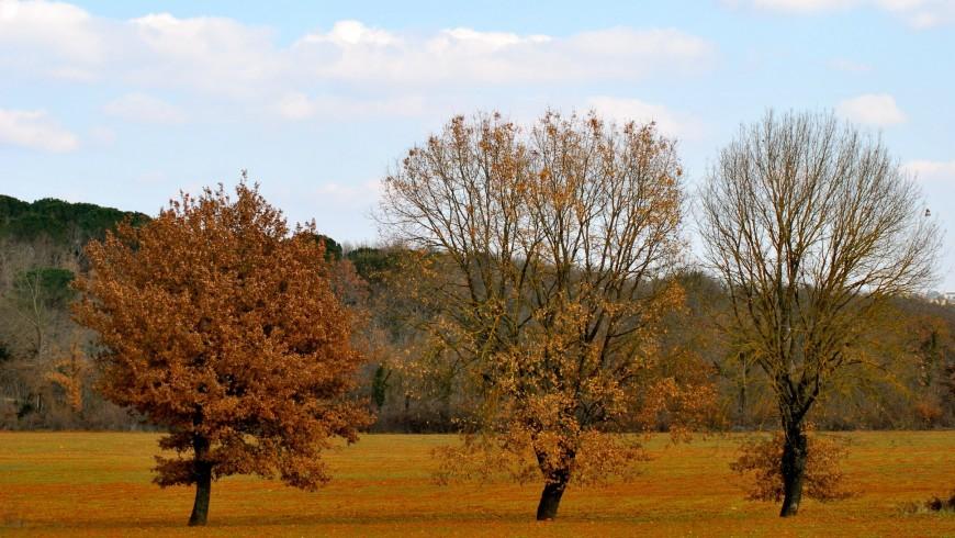 Vista de área protegida de Montagnola en Siena, Italia