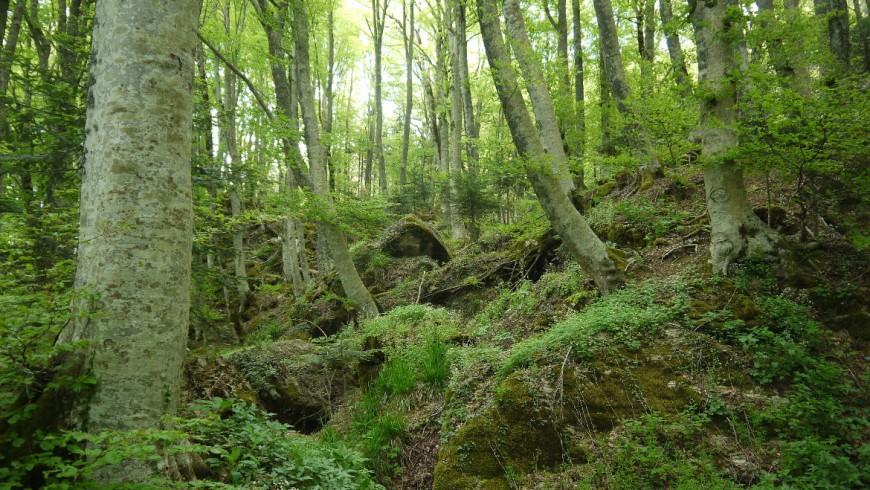 Bosques en La Verne, Toscana Italia.