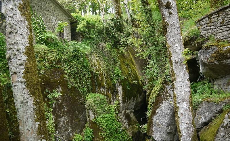 Árboles de los Bosques Sagrados La Verna Italia