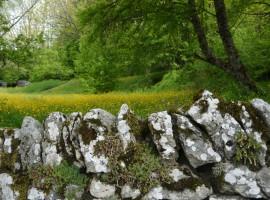 Bosques de abetos amarillos en La Verne, Toscana Italia.