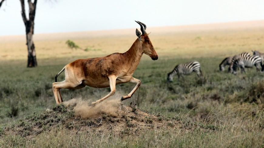 Parque Nacional de Serengeti, Tanzania