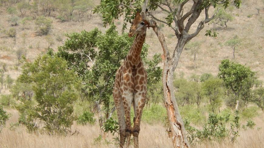 Parque Nacional Cruger, Sud África