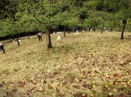 Hotel Posada del Valle, Asturias. Los 10 insólitos alojamientos eco-friendly de España