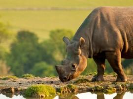 Rinoceronte del Livingstone Lodge, Reino Unido. Los 19 hoteles más extraños del mundo