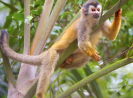 Monos del resort Costa Verde en Costa Rica. Los 19 hoteles más extraños del mundo