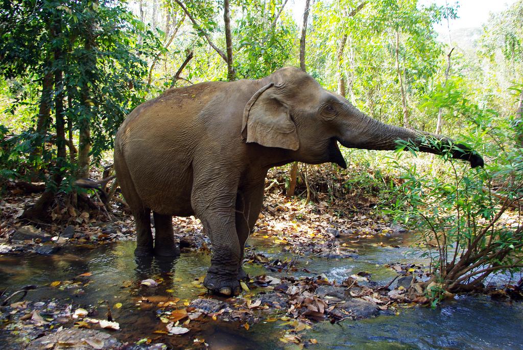 Ratanakiri, Camboya. Los seis lugares imperdibles de Camboya que debes visitar