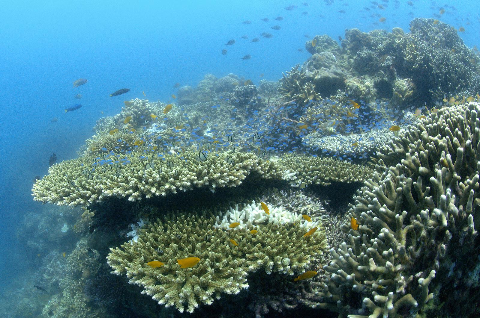 Arrecifes,El peligro de elegirlos: ¿Sabías cuánto contaminan los cruceros?