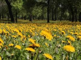 Serbia Verde parque