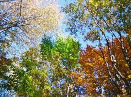 Serbia parque naturaleza