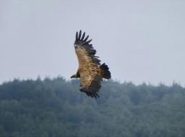 Serbia Naturaleza Selvaje