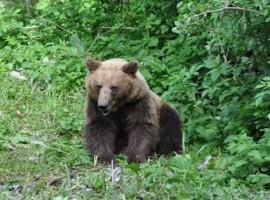 animales selvaje Serbia