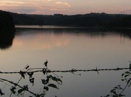 Serbia Lago Naturaleza
