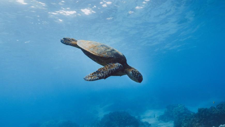 Tortugas Caretta Caretta en la Isla de Lampedusa
