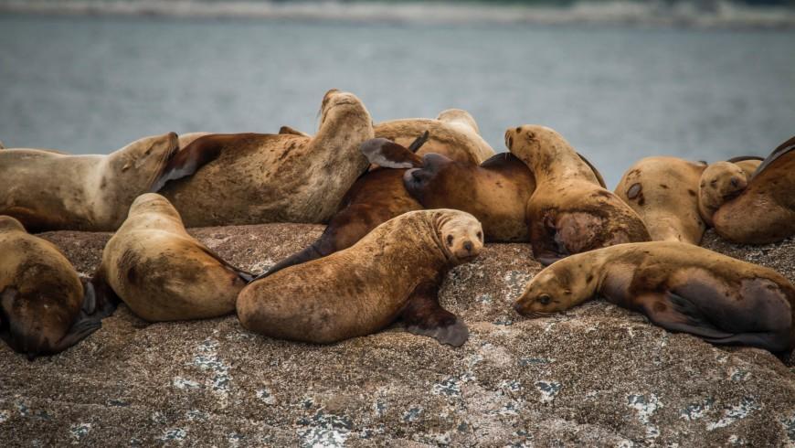 Leones marinos en California