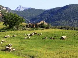 Vivienda y huerta ecológica en el Parque Natural de la Sierra de Grazalema