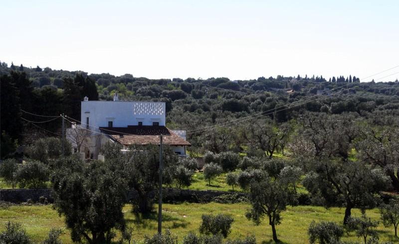 Masseria Bellolio: tu eco- boda entre olivos centenarios