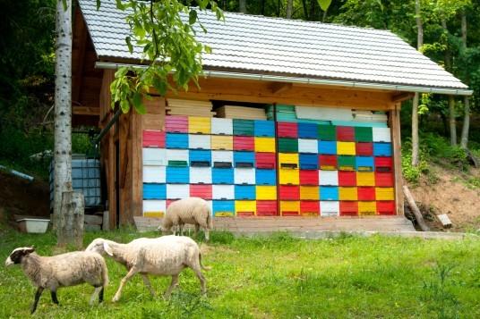 Crédito de la foto: Jošt Gantar para Slovenia.info