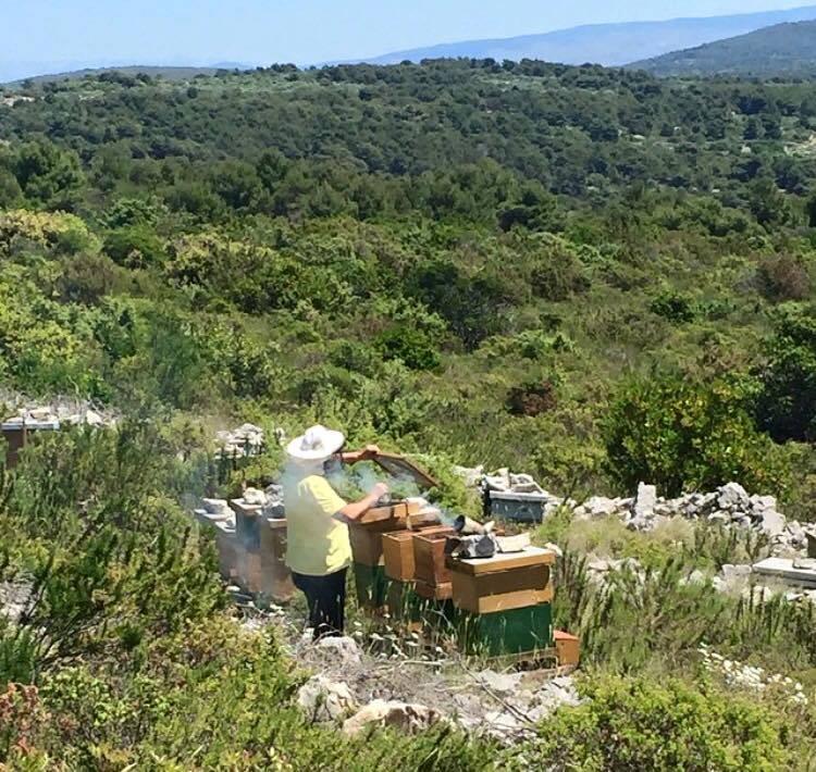 Pasa un día con un apicultor en la isla Šolta y haz tu propia miel