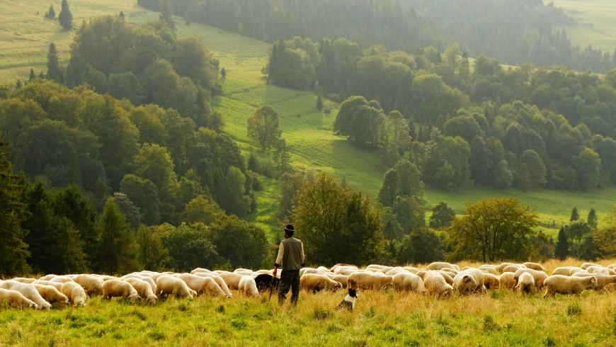 Conviértete en un pastor en el área de los osos y aúlla con lobos