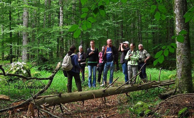 Disfruta de vacaciones de vida silvestre sin preocupaciones por el impacto social