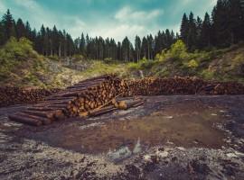 Deforestación como causa del calentamiento gloal
