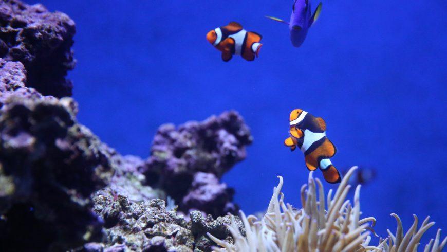 peces y arrecife de coral
