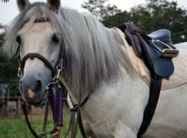 Paseo a cavallo