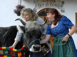 Vacaciones granja Trentino