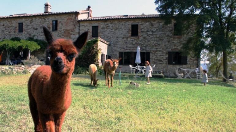 Agriturismo Alpaca Italia