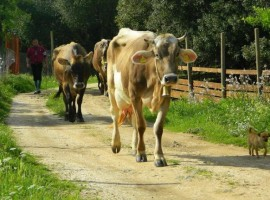 vacaciones en granj agripaules