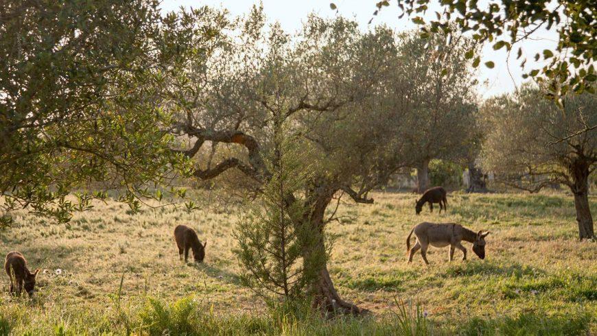 Islas Baleares: agroturismo Can Martí
