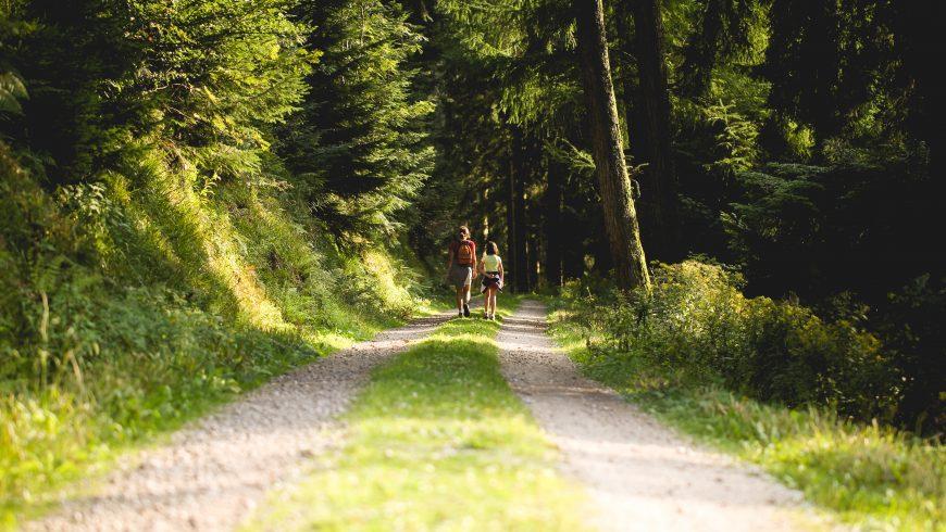Pasear en el bosque